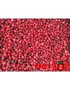 Yaban mersini - IQF Dondurulmuş Meyve - FRUIT B2B