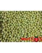 Stachelbeere - IQF Gefrorene Früchte - FRUIT B2B