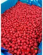 Groseille class 1- IQF Fruits surgelés - FRUIT B2B