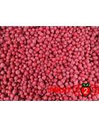 Rote Johannisbeere class 2 - IQF Gefrorene Früchte - FRUIT B2B